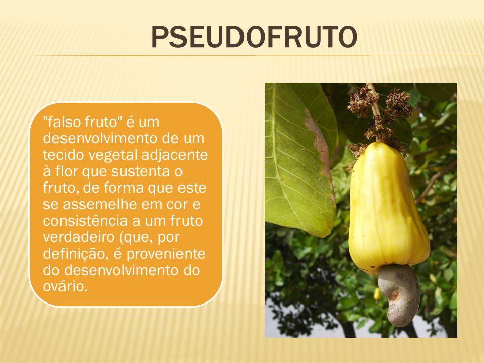 pseudofruto
