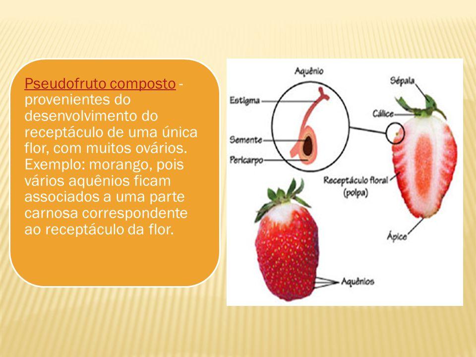 Pseudofruto composto - provenientes do desenvolvimento do receptáculo de uma única flor, com muitos ovários.
