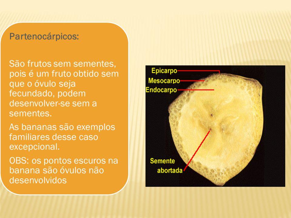 Partenocárpicos: São frutos sem sementes, pois é um fruto obtido sem que o óvulo seja fecundado, podem desenvolver-se sem a sementes.