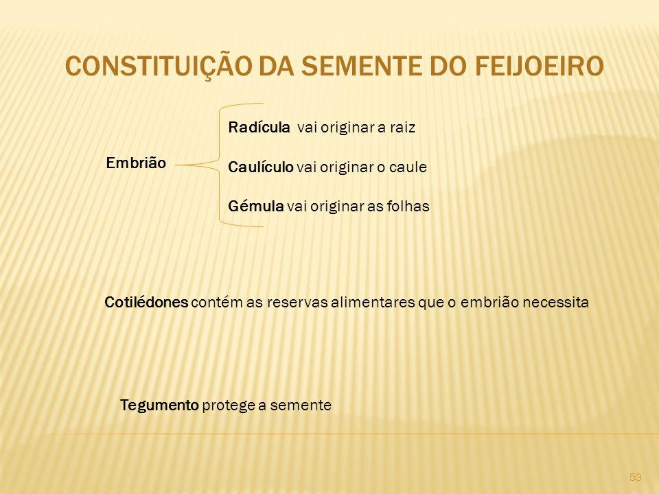 CONSTITUIÇÃO DA SEMENTE DO FEIJOEIRO