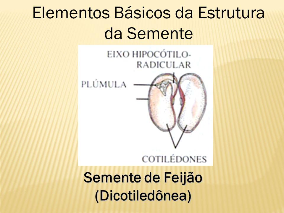 Elementos Básicos da Estrutura da Semente