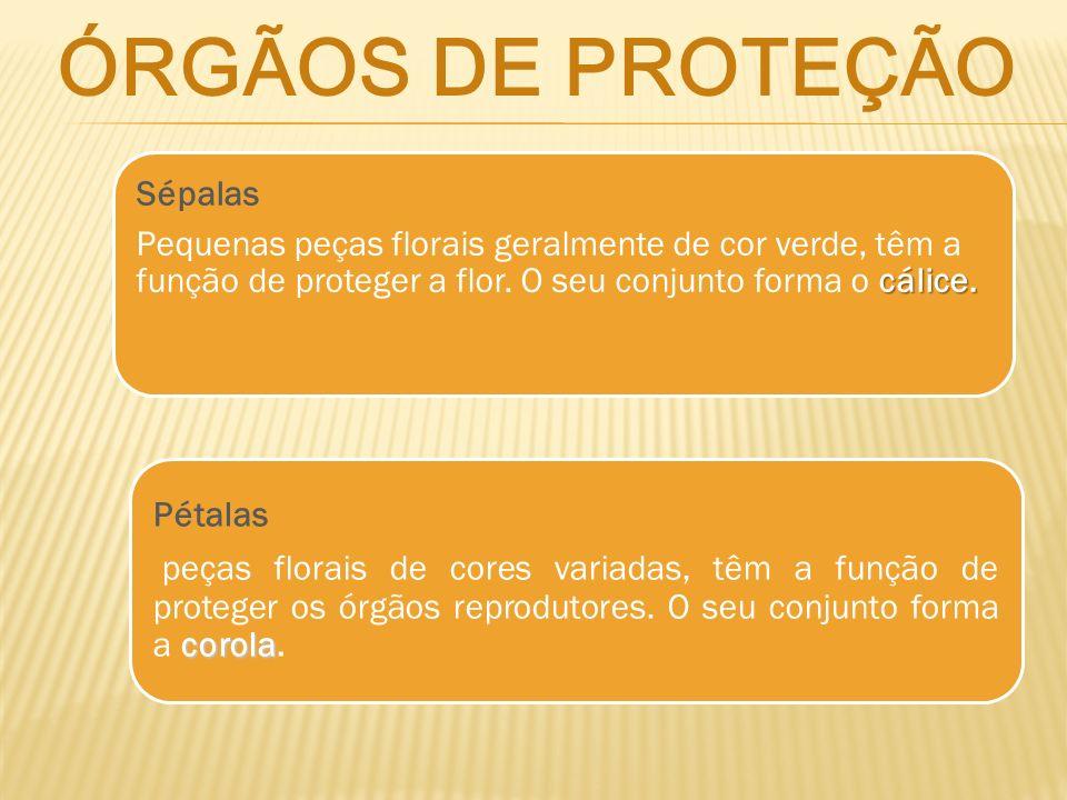 ÓRGÃOS DE PROTEÇÃO Sépalas