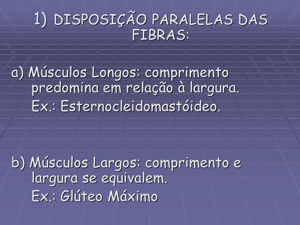 DISPOSIÇÃO PARALELAS DAS FIBRAS: