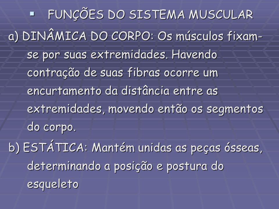 FUNÇÕES DO SISTEMA MUSCULAR
