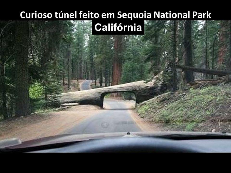 Curioso túnel feito em Sequoia National Park