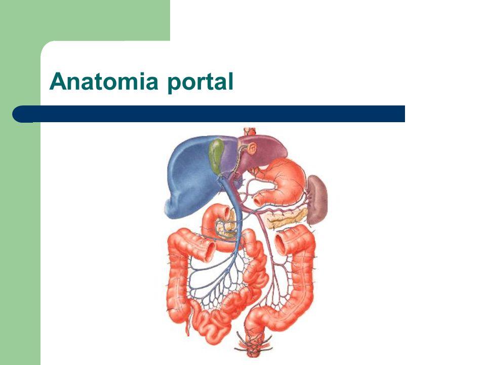 Anatomia portal