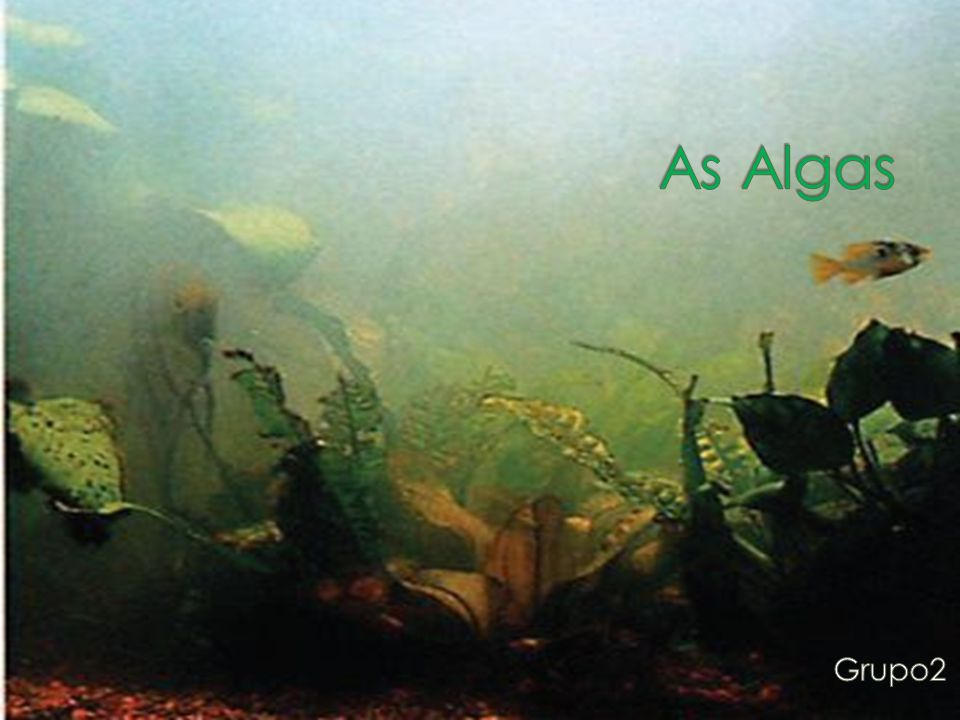 As Algas Grupo2