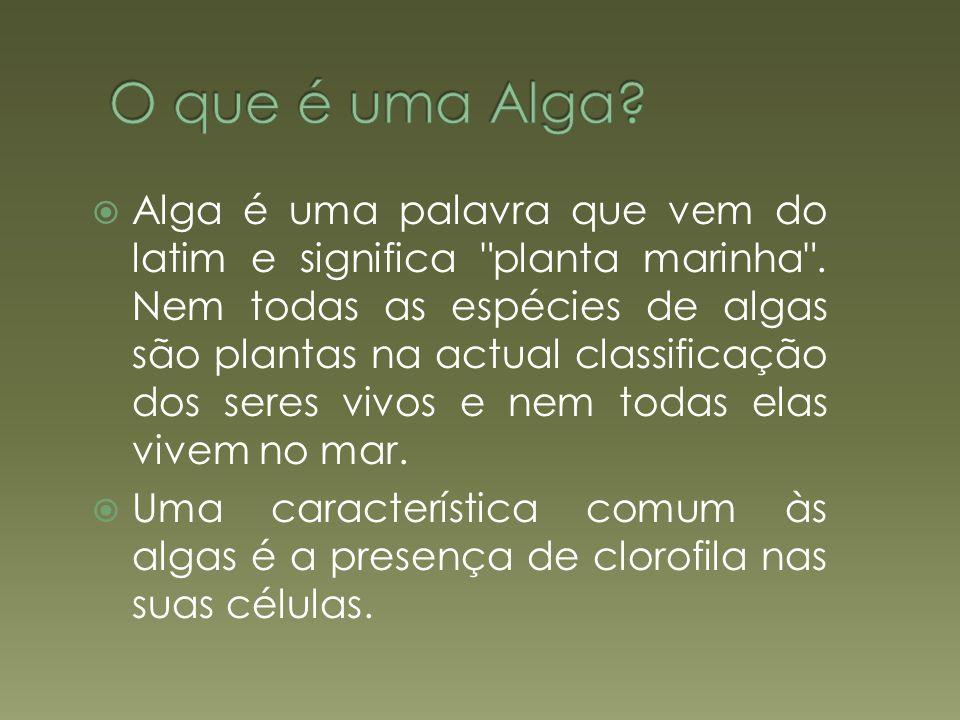 O que é uma Alga