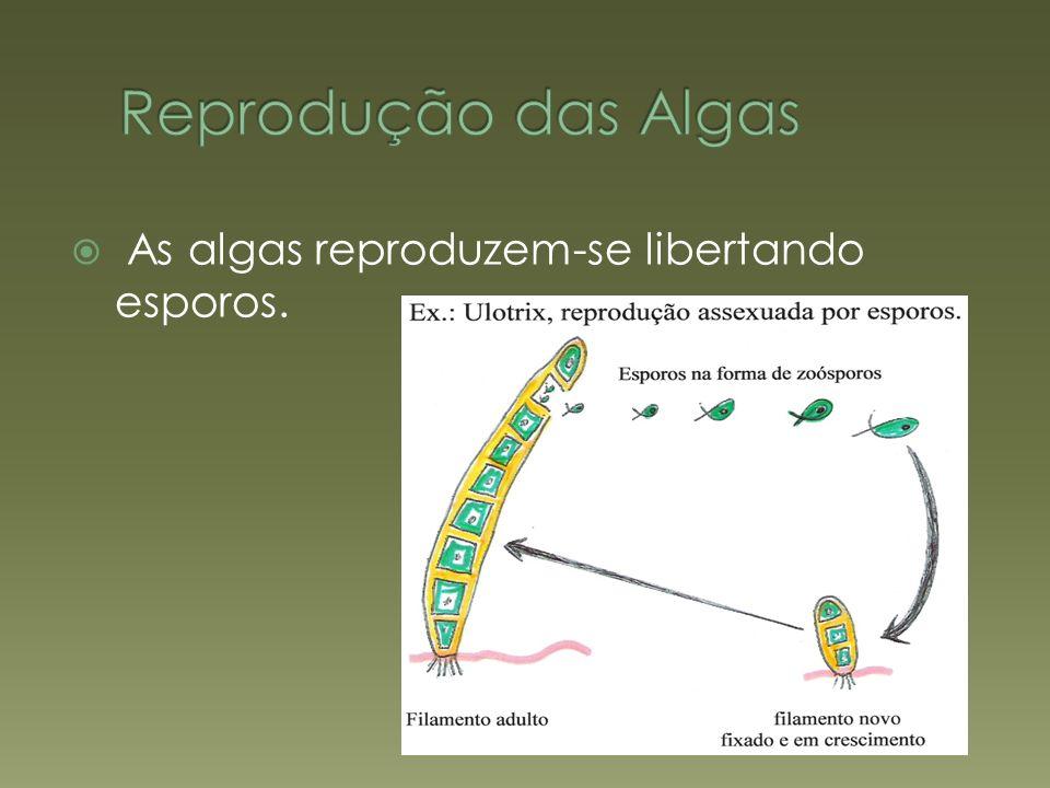 Reprodução das Algas As algas reproduzem-se libertando esporos.