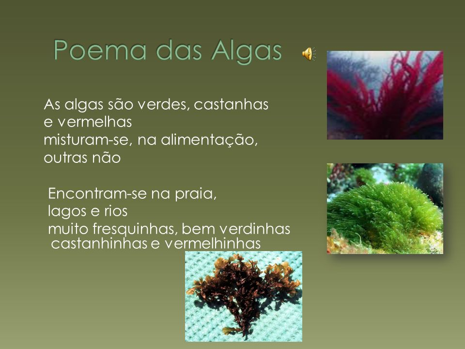 Poema das Algas