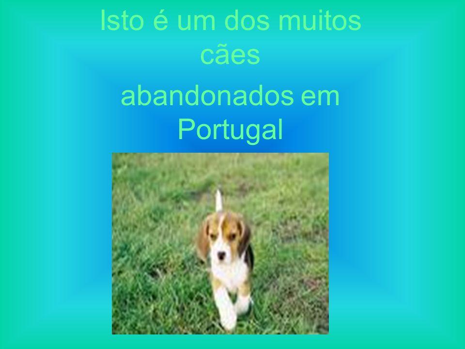 Isto é um dos muitos cães abandonados em Portugal