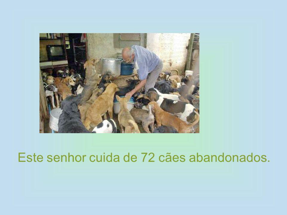 Este senhor cuida de 72 cães abandonados.
