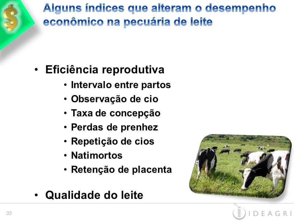Alguns índices que alteram o desempenho econômico na pecuária de leite