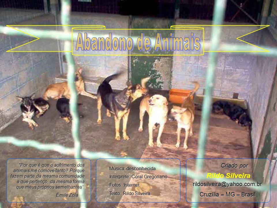 Abandono de Animais Rildo Silveira Criado por