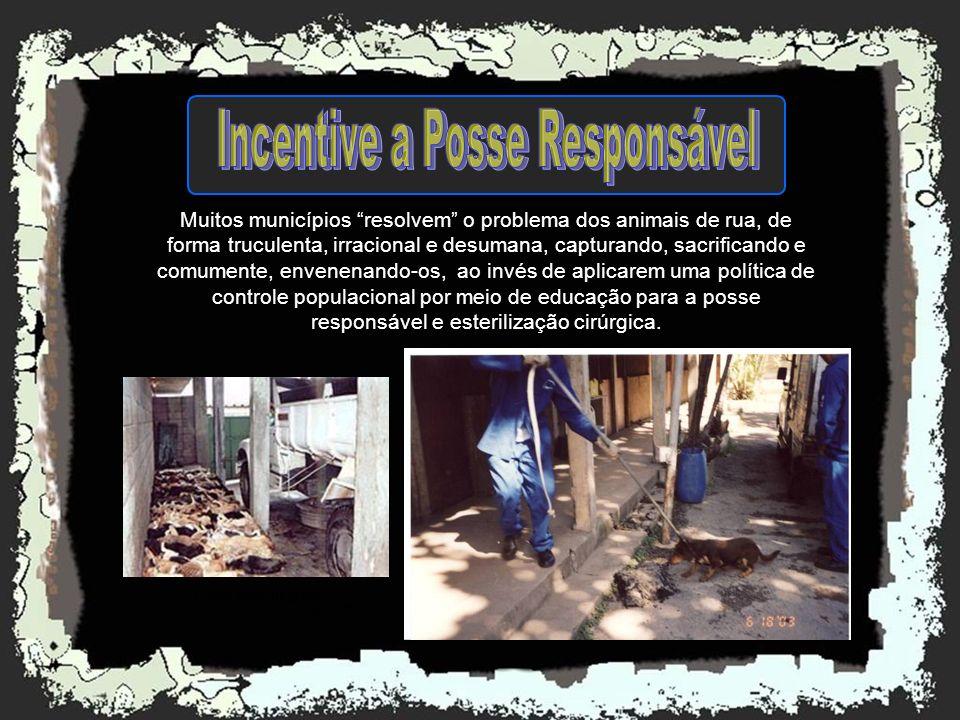 Incentive a Posse Responsável