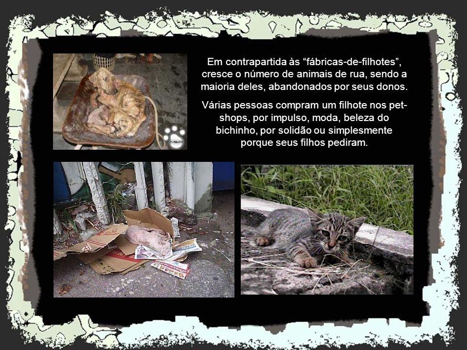 Em contrapartida às fábricas-de-filhotes , cresce o número de animais de rua, sendo a maioria deles, abandonados por seus donos.
