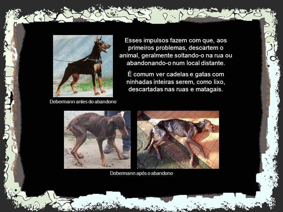 Esses impulsos fazem com que, aos primeiros problemas, descartem o animal, geralmente soltando-o na rua ou abandonando-o num local distante.