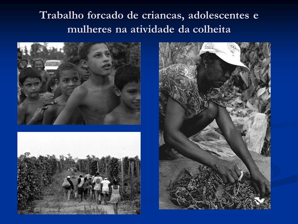 Trabalho forcado de criancas, adolescentes e mulheres na atividade da colheita