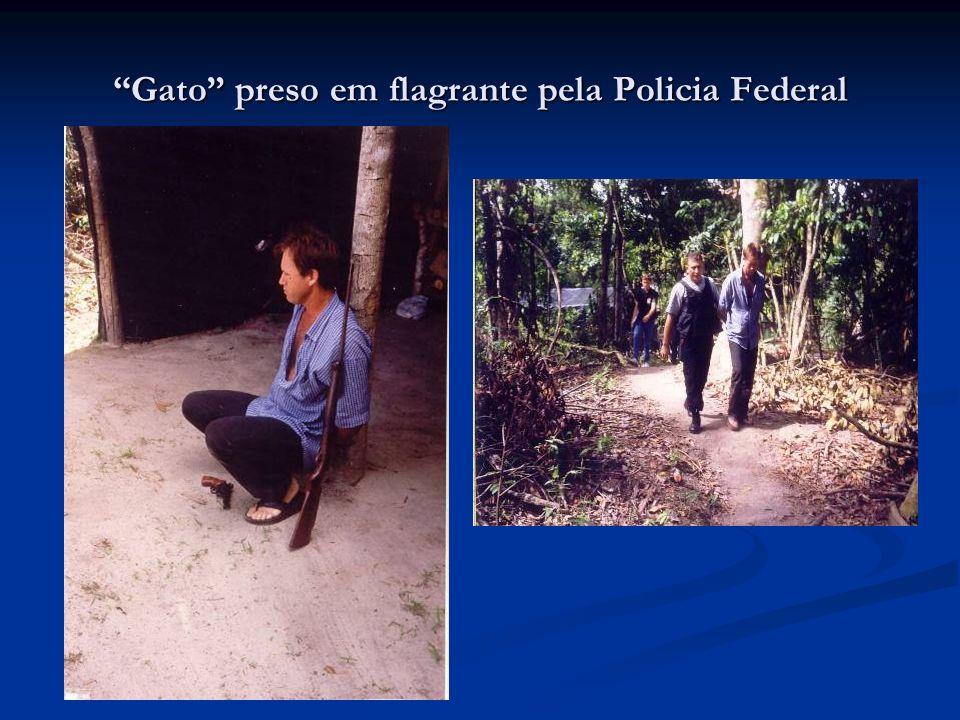Gato preso em flagrante pela Policia Federal