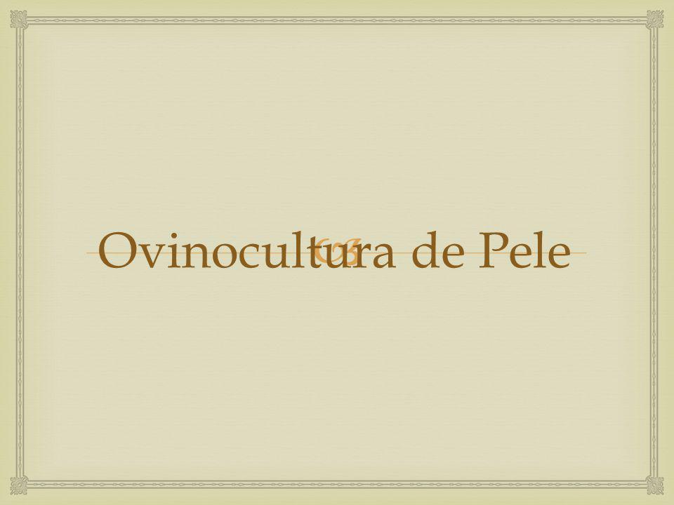 Ovinocultura de Pele