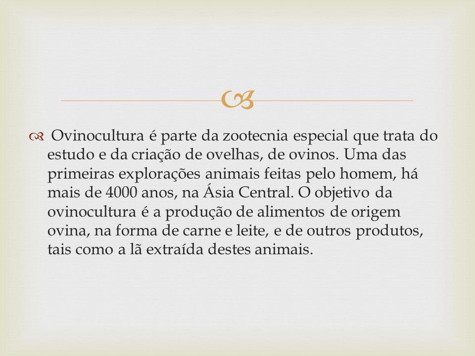 Ovinocultura é parte da zootecnia especial que trata do estudo e da criação de ovelhas, de ovinos.