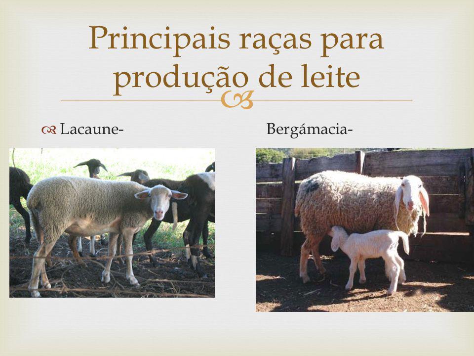 Principais raças para produção de leite