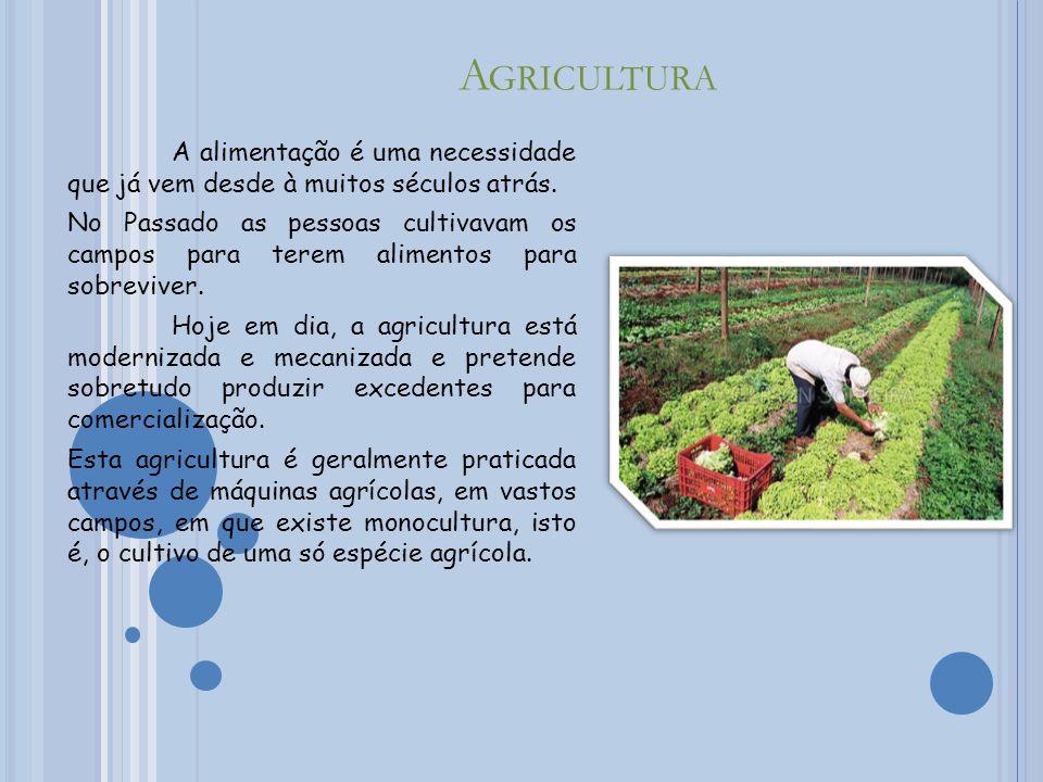Agricultura A alimentação é uma necessidade que já vem desde à muitos séculos atrás.