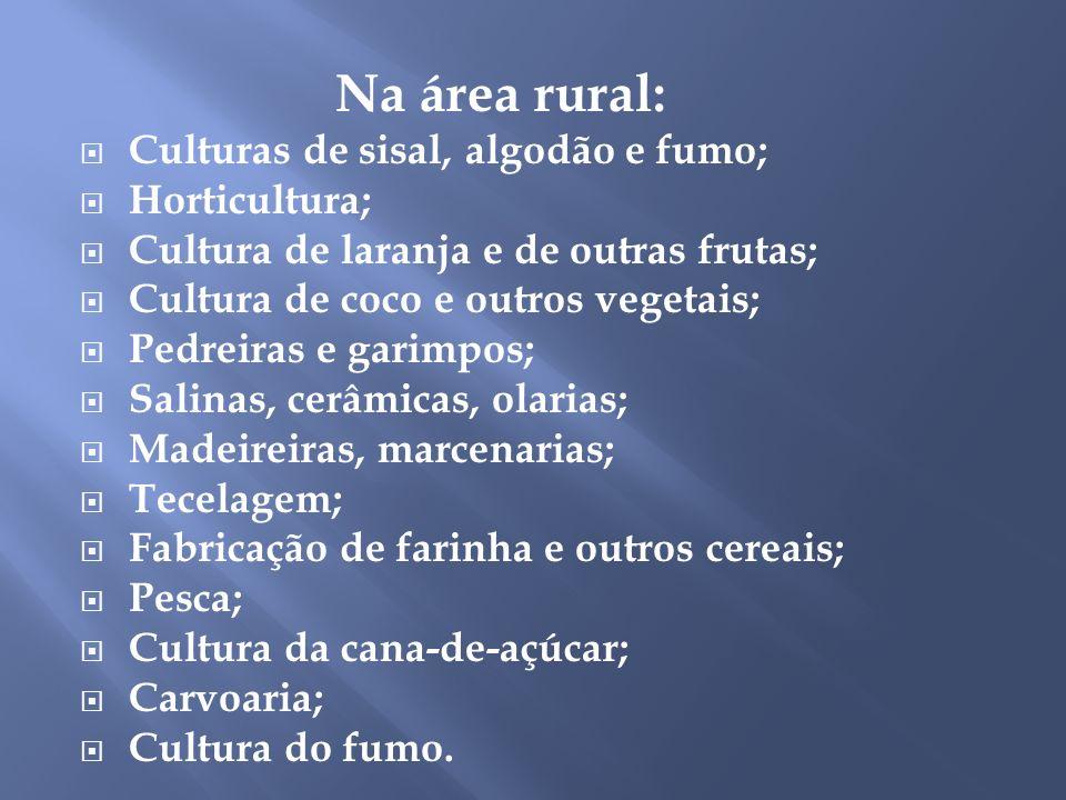 Na área rural: Culturas de sisal, algodão e fumo; Horticultura;