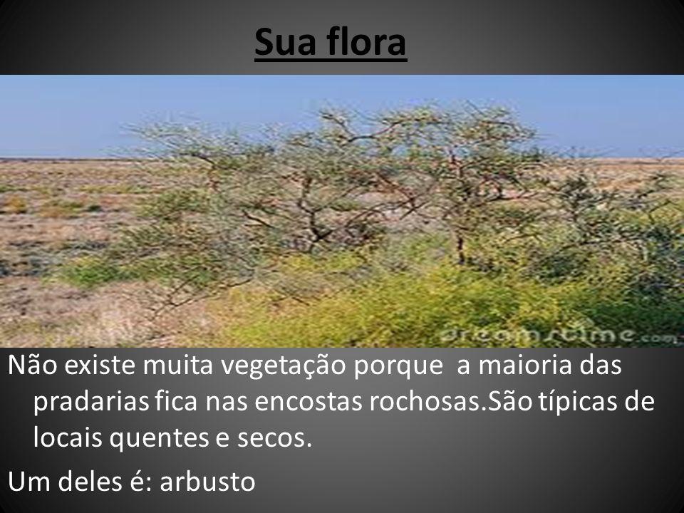 Sua flora