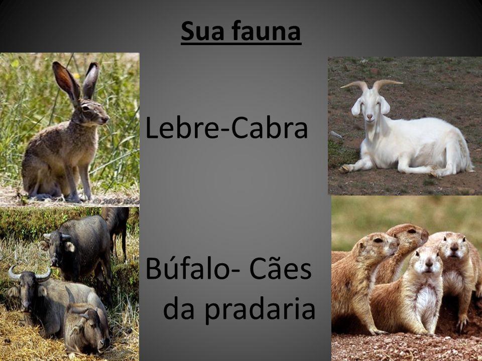 Búfalo- Cães da pradaria