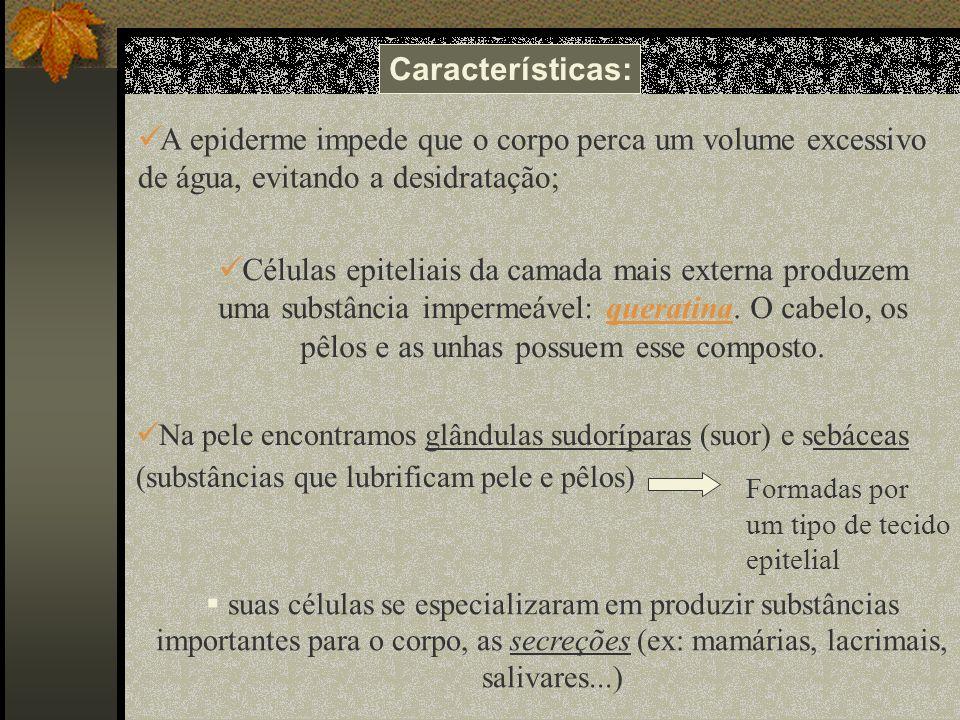 Características: A epiderme impede que o corpo perca um volume excessivo de água, evitando a desidratação;