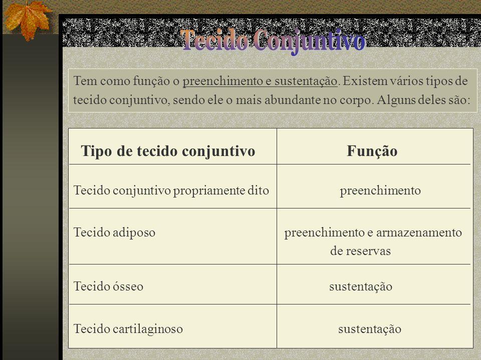Tecido Conjuntivo Tipo de tecido conjuntivo Função