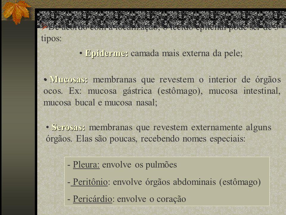 De acordo com a localização, o tecido epitelial pode ser de 3 tipos: