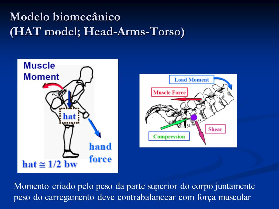 Modelo biomecânico (HAT model; Head-Arms-Torso)