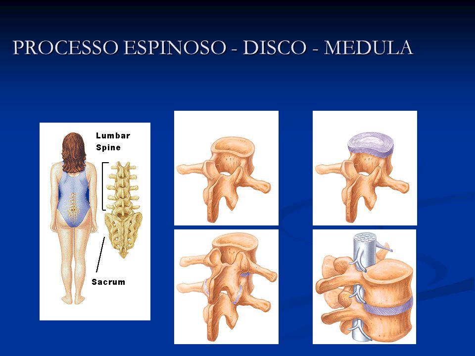 PROCESSO ESPINOSO - DISCO - MEDULA