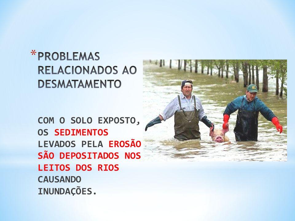 PROBLEMAS RELACIONADOS AO DESMATAMENTO