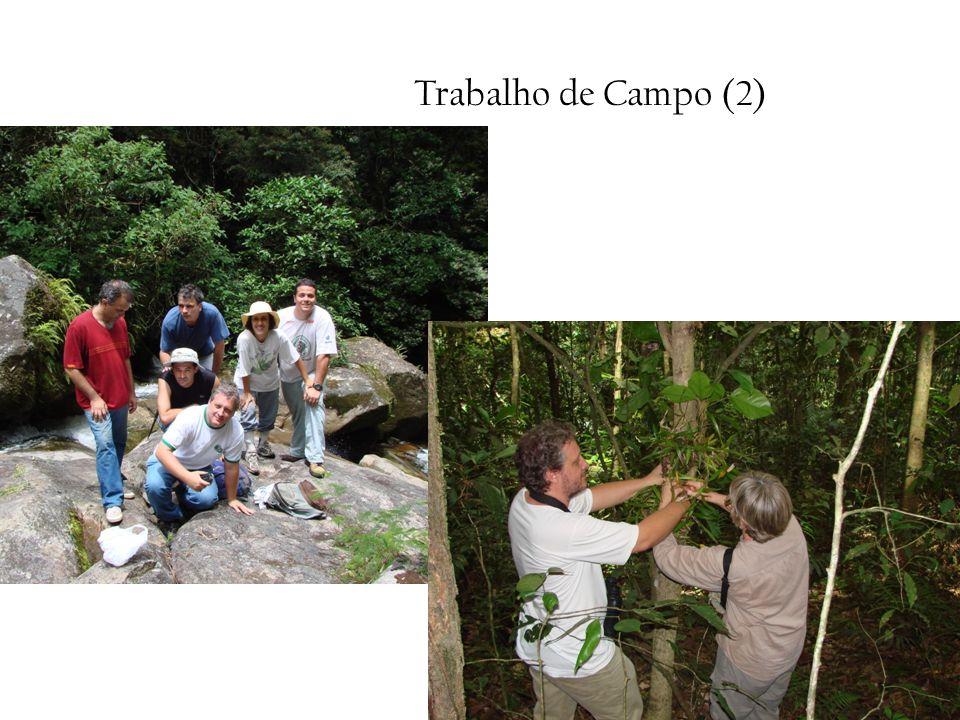 Trabalho de Campo (2)