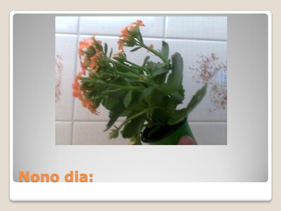 Nono dia: