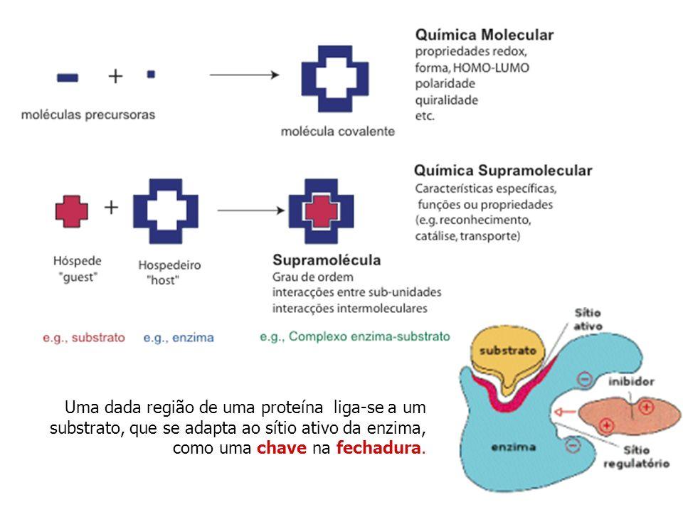Uma dada região de uma proteína liga-se a um substrato, que se adapta ao sítio ativo da enzima, como uma chave na fechadura.