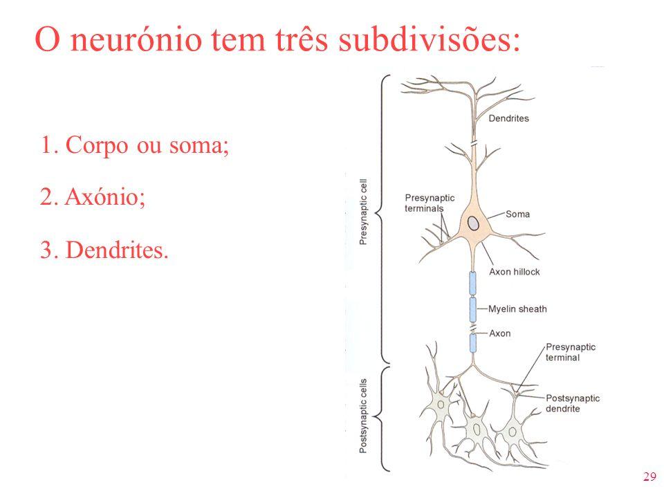 O neurónio tem três subdivisões: