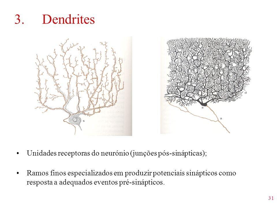 3. Dendrites Unidades receptoras do neurónio (junções pós-sinápticas);