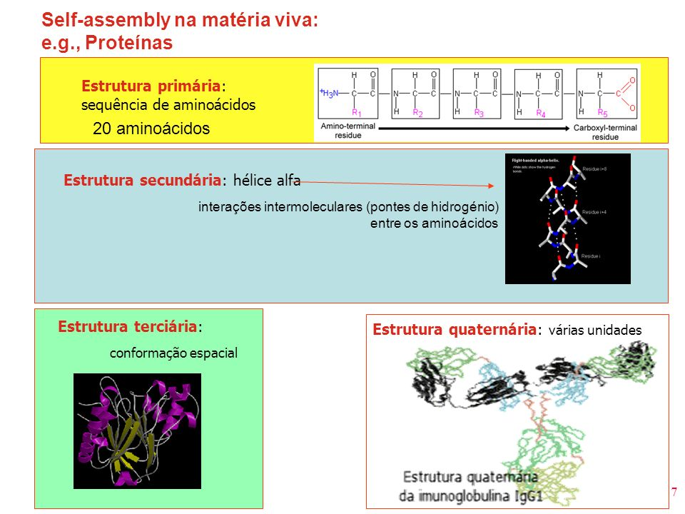 Self-assembly na matéria viva: e.g., Proteínas