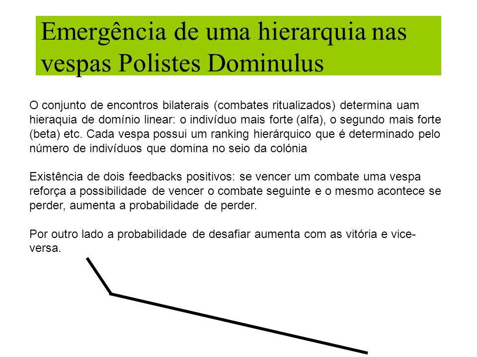 Emergência de uma hierarquia nas vespas Polistes Dominulus