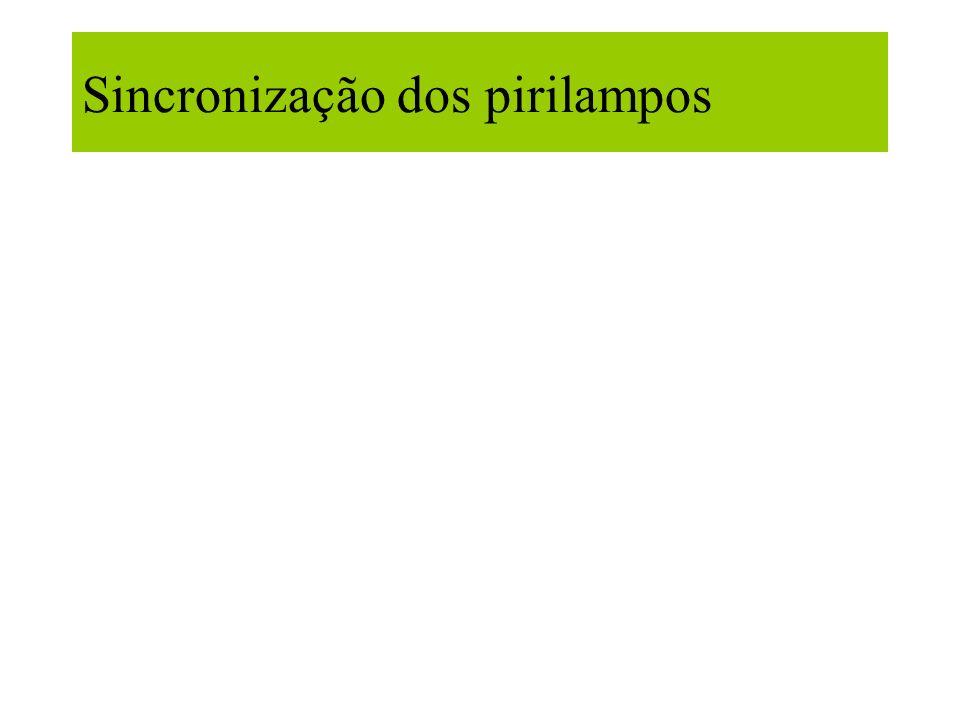 Sincronização dos pirilampos