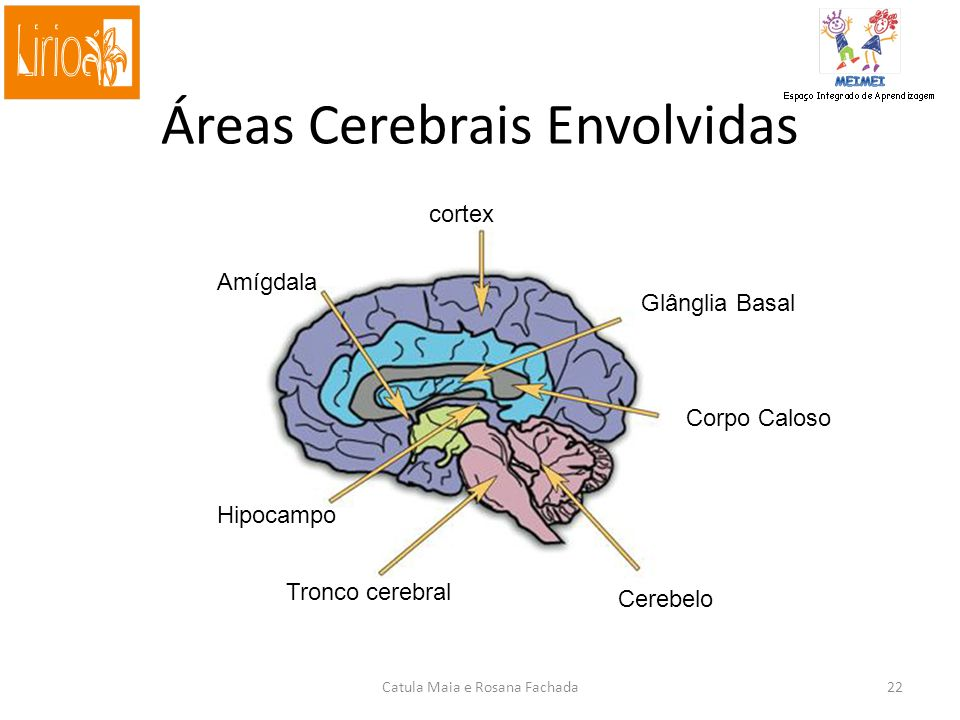 Áreas Cerebrais Envolvidas