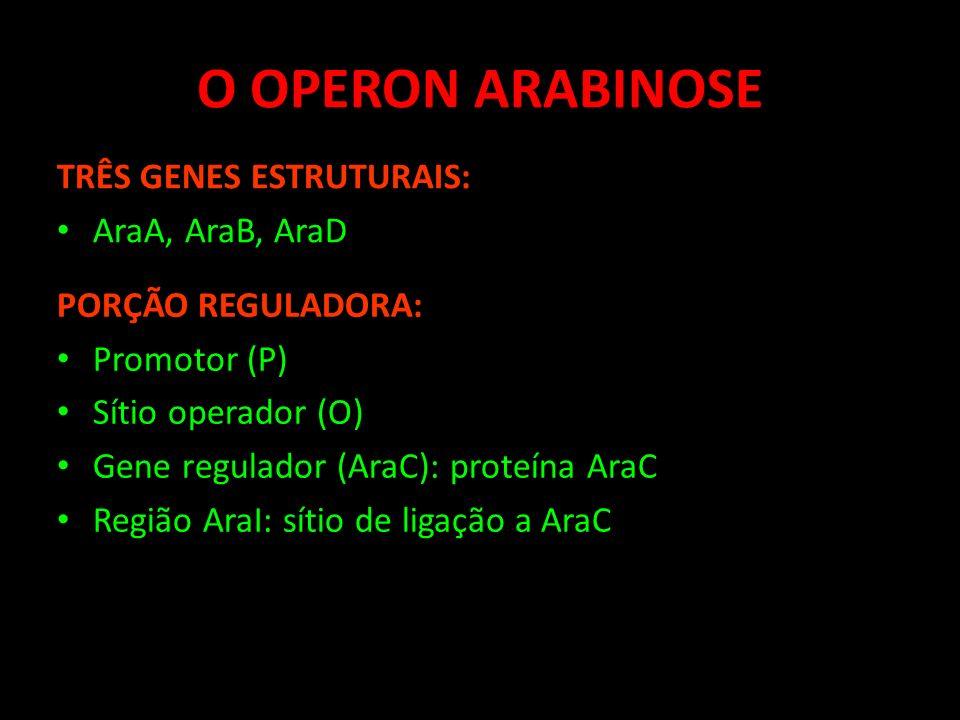 O OPERON ARABINOSE TRÊS GENES ESTRUTURAIS: AraA, AraB, AraD