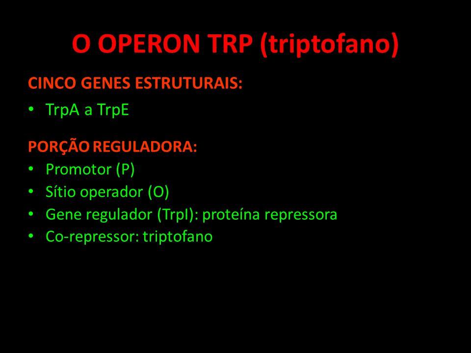 O OPERON TRP (triptofano)