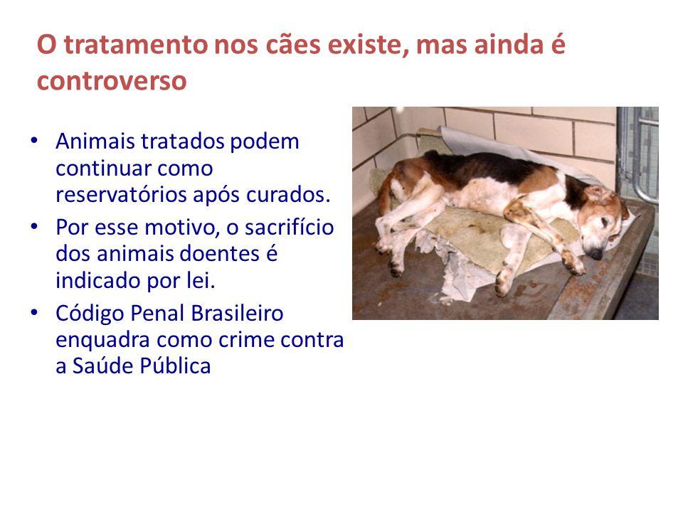 O tratamento nos cães existe, mas ainda é controverso