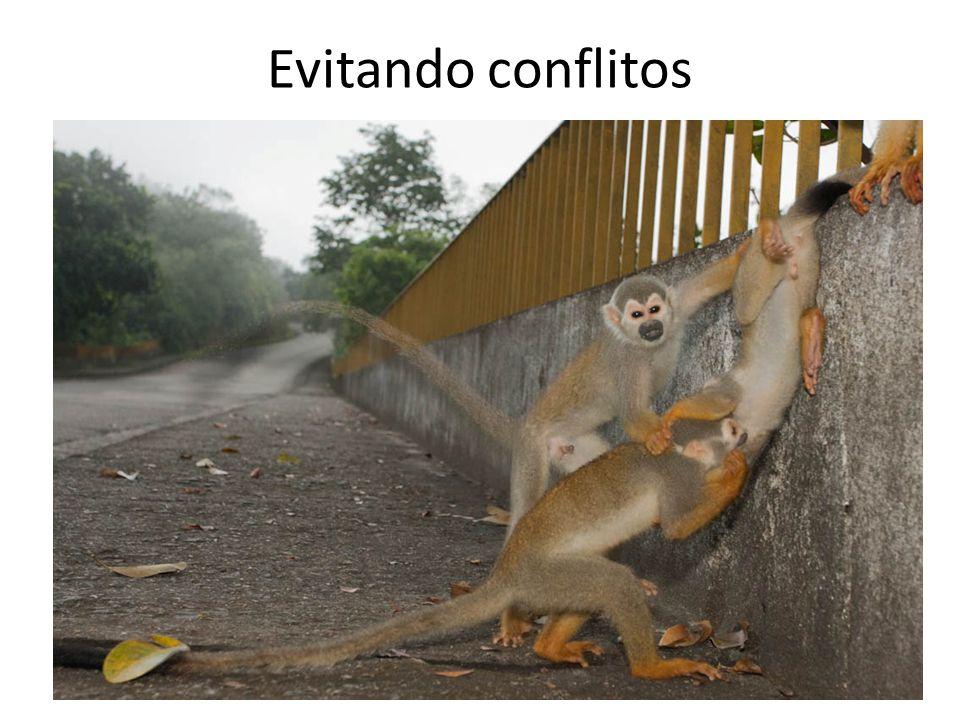 Evitando conflitos