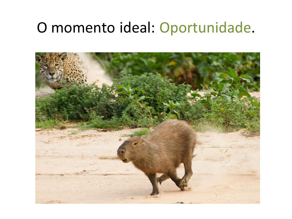 O momento ideal: Oportunidade.